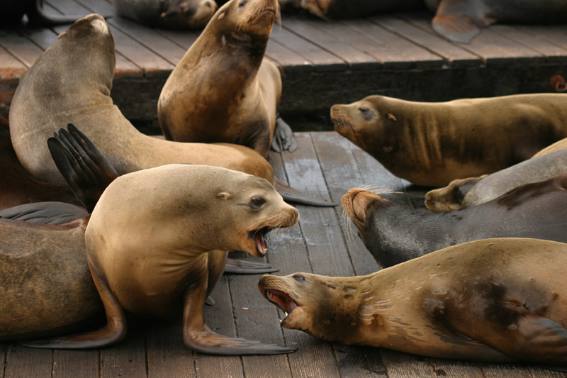 San Francisco:sea lions